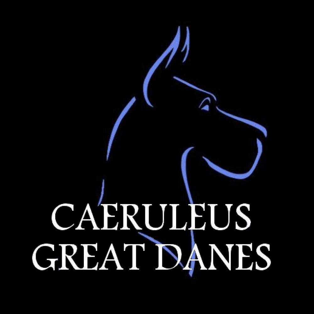 Caeruleus-750087820