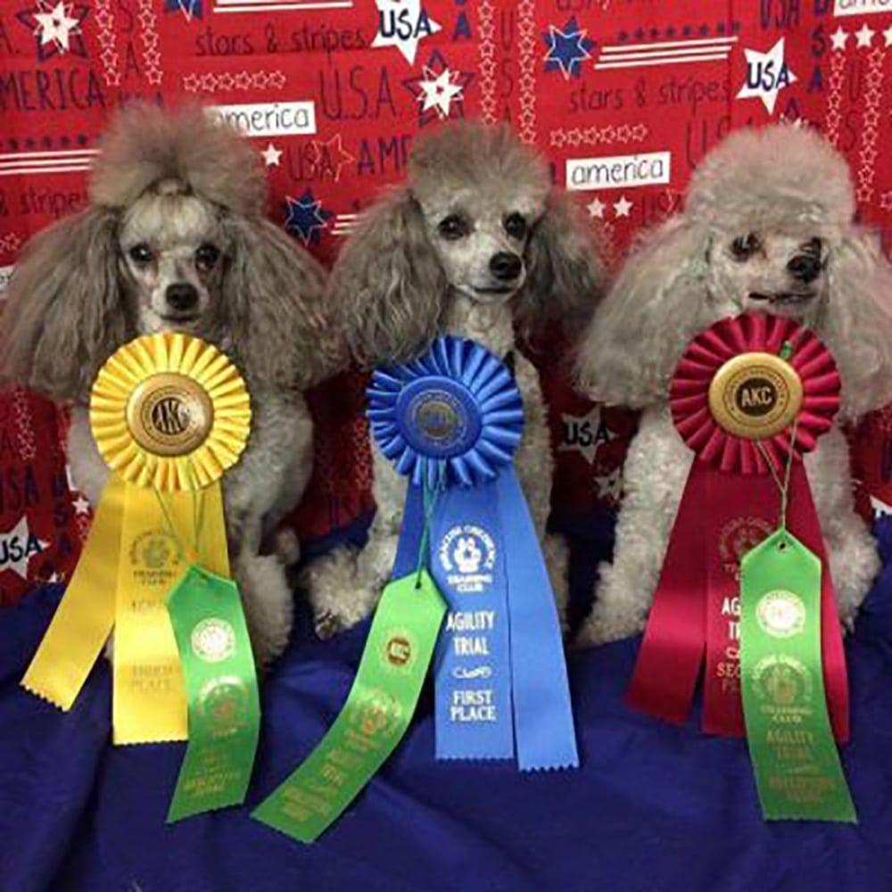 G8rcreek Poodles - Breeder & Rescue Certification