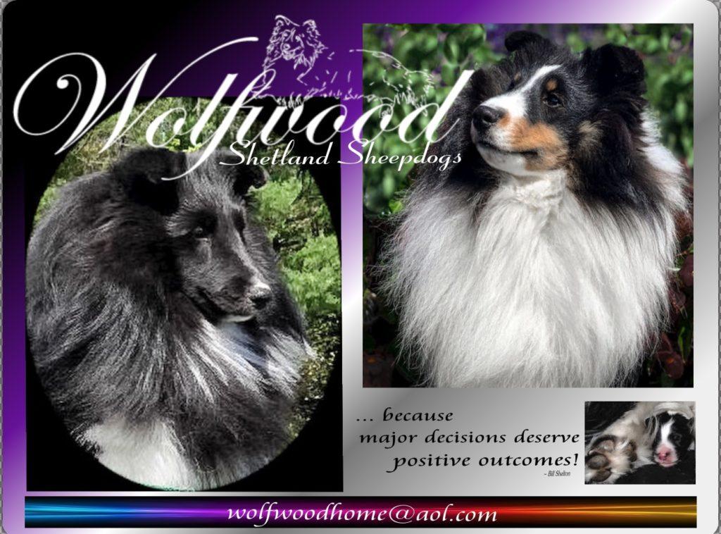 Wolfwood Shetland Sheepdogs