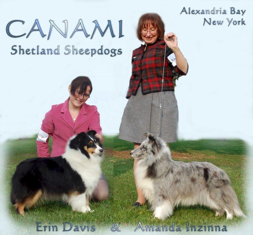 Canami Shelties