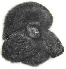 Stonewood Poodles